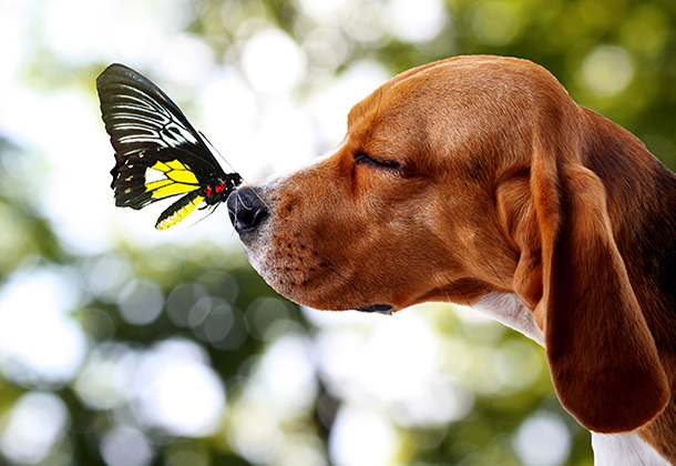 Butterfly landing on dog